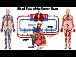 """Qual è il """"carburante"""" del cuore?"""
