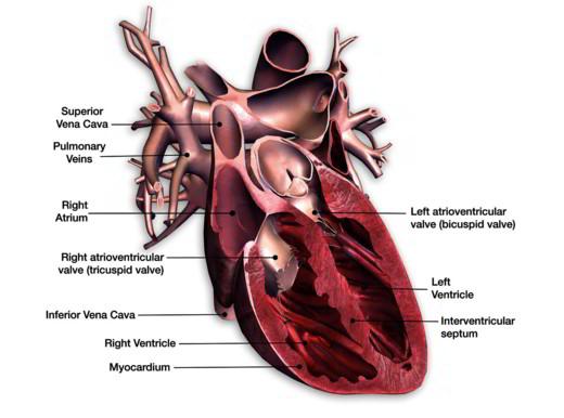 Cos'è lo scompenso cardiaco