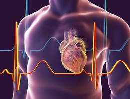 Infarto, le tecniche del futuro per svelare i segreti delle coronarie