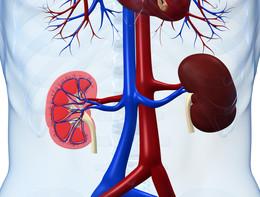 Chi ha il cuore malato mette a rischio i reni