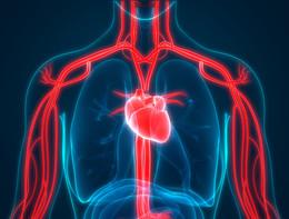 Un'alleanza per proteggere la salute del cuore