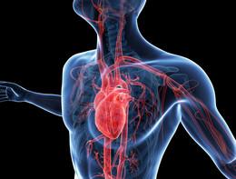 Meglio l'arteria della vena nel by-pass dopo un infarto